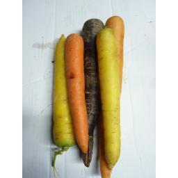 Carrots - Rainbow