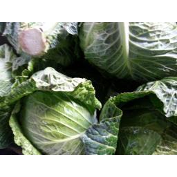 Cabbage Round.jpg