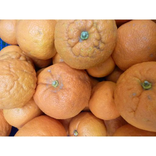 Oranges Seville.jpg