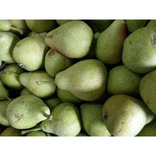Pears Anjou.jpg